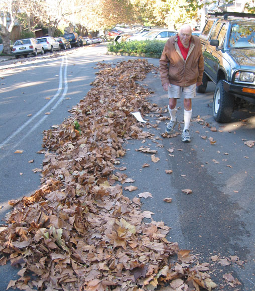 annandale-streets-leaves-tidy-ust.jpg