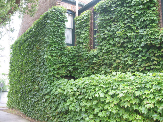 bondi-house-plant-covered-2-uh.jpg