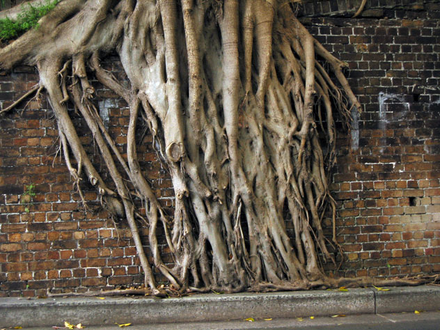 coogee-tree-roots-e.jpg