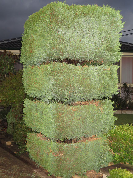 milperra-tiered-shrubs-1-w.jpg