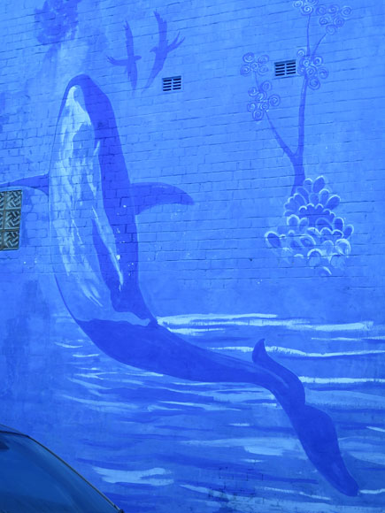 newtown-wall-aquarium-up.jpg