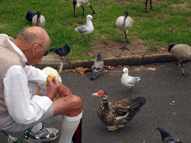 north-parramatta-duck-begging-w.jpg