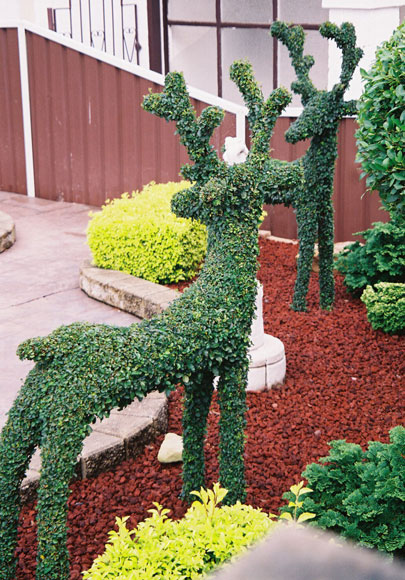 birrong-shrub-deer-shape-ush.jpg