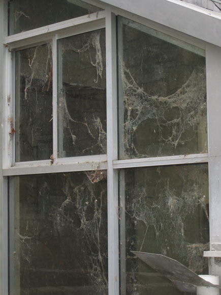 north-sydney-house-cobwebs-xh.jpg