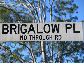 street-themes-shrubs-brigalow-kshr.jpg