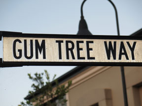 street-themes-shrubs-gum-tree-kshr.jpg