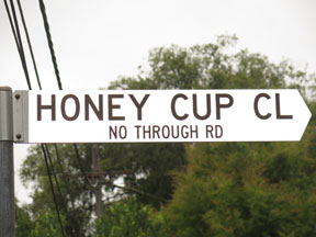 street-themes-shrubs-honey-cup-kshr.jpg
