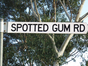 street-themes-shrubs-spotted-gum-kshr.jpg